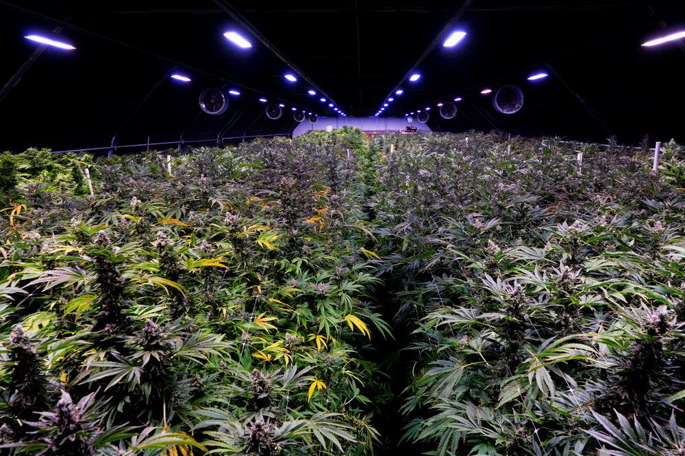 Cali Select Interviewed in Marijuana Business Daily